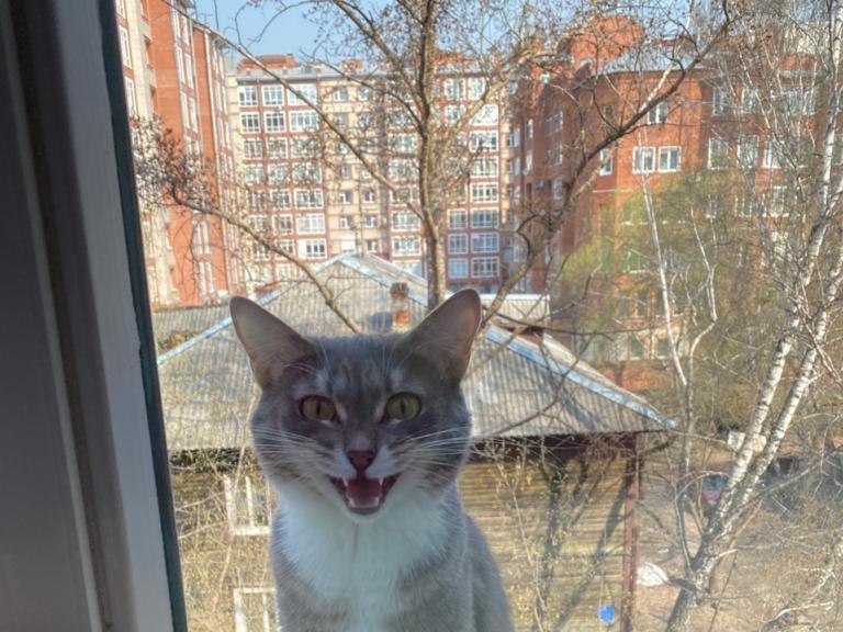 Фото «Выбирает самые неожиданные места»: как девятая «Главная кошечка Томска» даёт лапу, принимает ванну и седлает пылесос 8