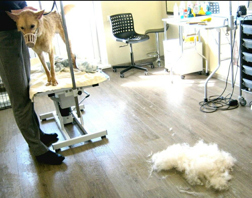 фото «33 несчастья»: невероятная история о том, как приютскую собаку с онкологией удочерили в Новосибирске 4