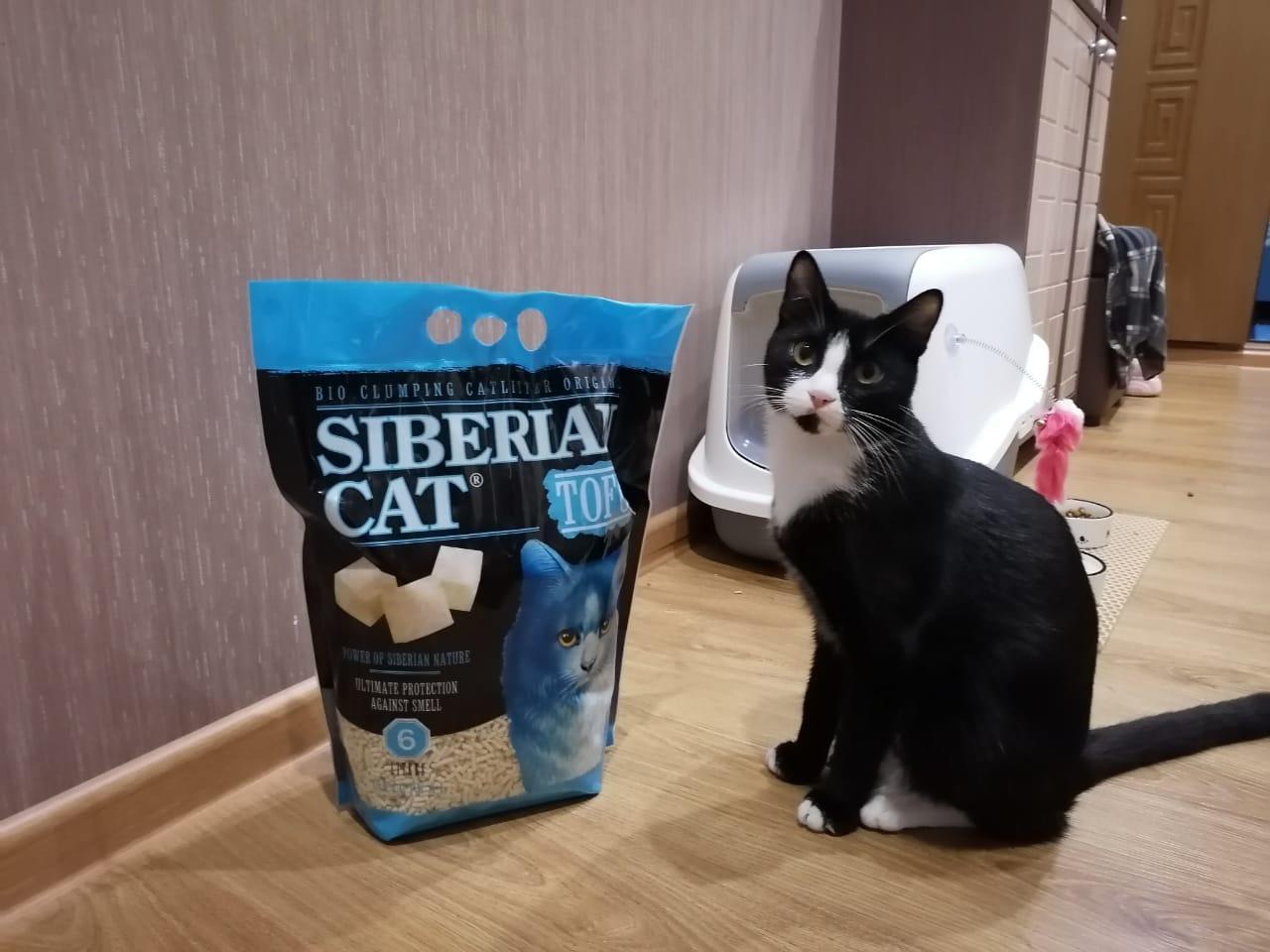фото «Ласковый и нежный котя» из приюта: специальный приз достался участнику конкурса «Главный котик Новосибирска-2021» 2