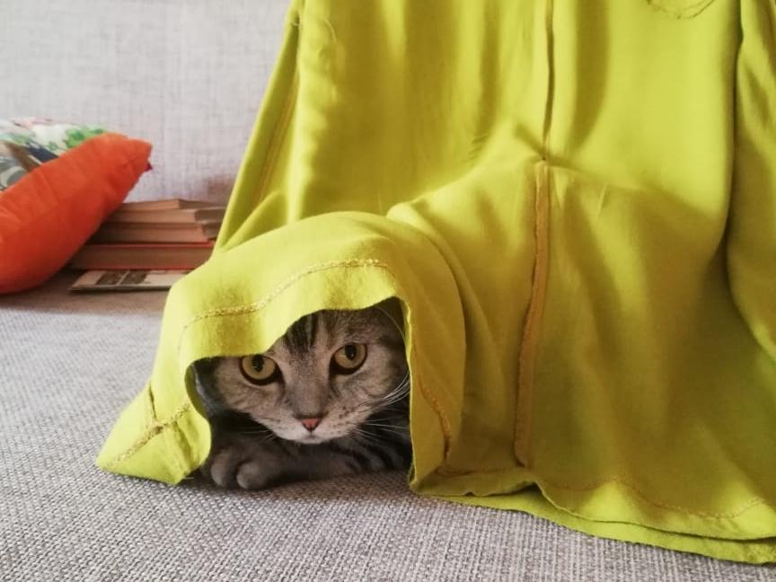 фото «Звук когтей, бешено скребущих по паркету»: как финалист конкурса «Главный котик Омска» превращается в дикого тигра и открывает охоту на людей 10