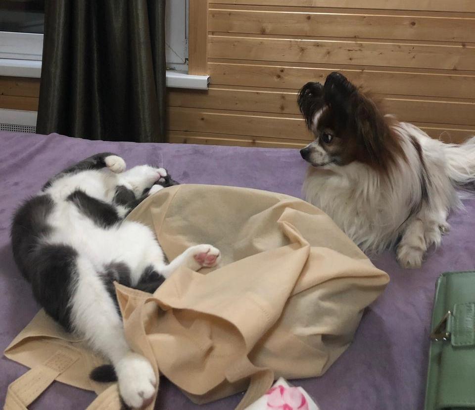 Фото «Сам ко мне пришёл и остался»: как десятый «Главный котик Томска» охраняет свою хозяйку и служит ей живым антистрессом 5