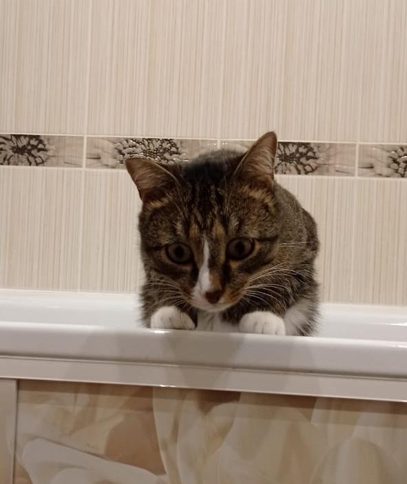 фото «Пятеро по лавкам – это счастье»: десятый «Главный котик Омска» Жорик стремится победить ради своей большой кошачьей семьи 4