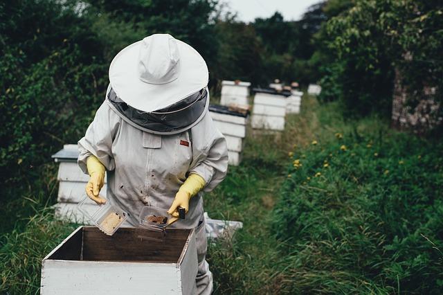 Фото Запрет на вывоз гречки, экзамен по русскому для иностранцев и защита пчёл: что изменится в жизни россиян с 1 июня 2021 года 4