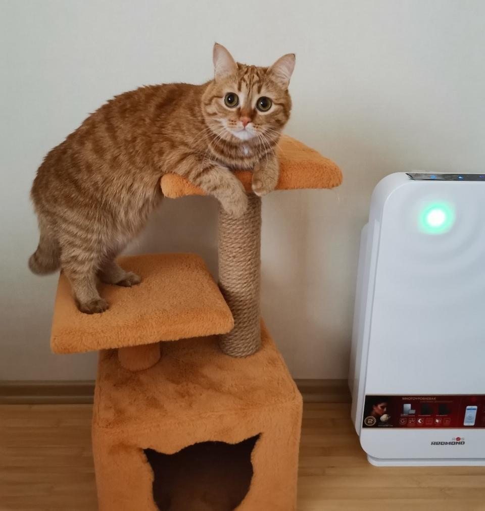 фото Голубь-тролль на балконе и охота во дворе: как финалистка конкурса «Главный котик Новосибирска» Персия проводит свой досуг и развлекает хозяев 7