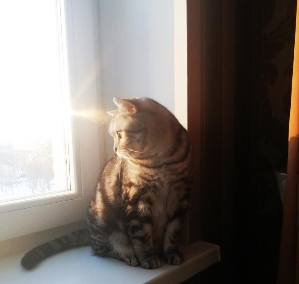 фото «Звук когтей, бешено скребущих по паркету»: как финалист конкурса «Главный котик Омска» превращается в дикого тигра и открывает охоту на людей 7