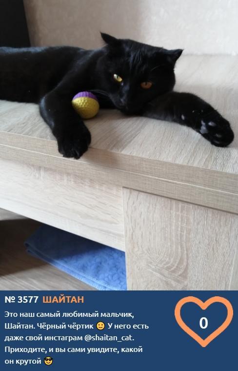 фото Блогер Шайтан стал участником конкурса «Главный котик Новосибирска-2021» 2