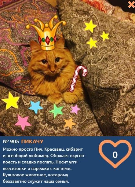 Фото Рыжий королевич Пикачу борется за звание «Главного котика Томска-2021» 2