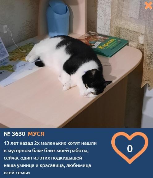 фото Найденная в мусорном баке совсем малышкой Муся стала участницей конкурса «Главный котик Новосибирска-2021» 2