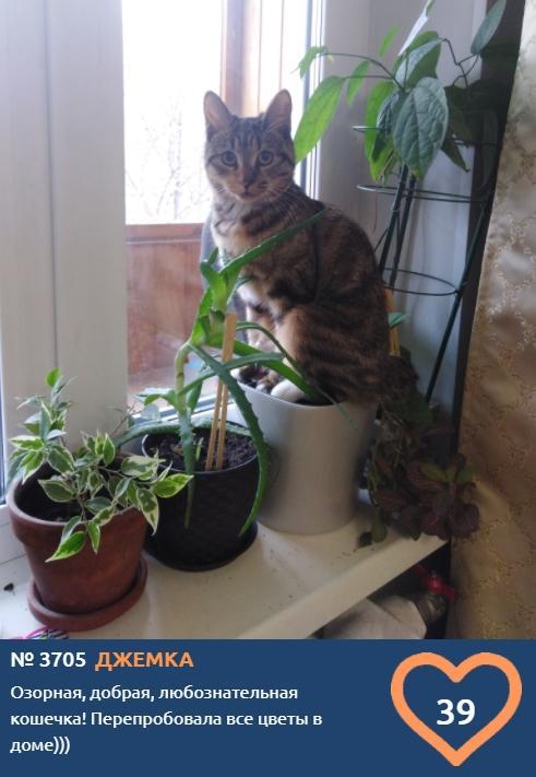 фото Любознательная Джемка устала есть цветы и хочет выиграть годовой запас корма в конкурсе «Главный котик Новосибирска-2021» 2