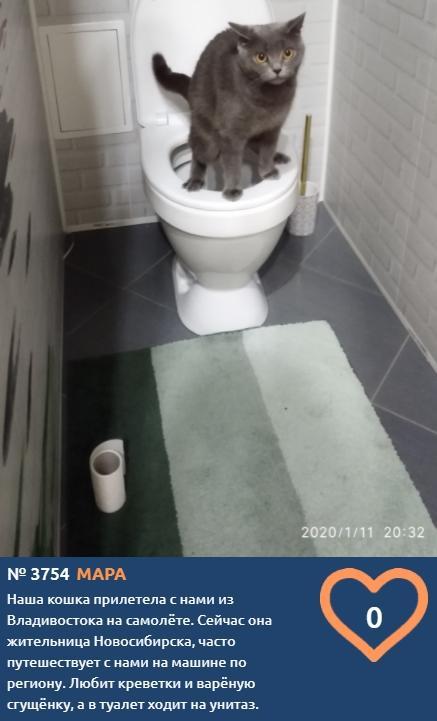 фото Путешественницу Мару застали врасплох во время создания снимка для конкурса «Главный котик Новосибирска-2021» 2