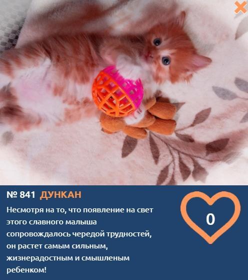 Фото «Его появление на свет сопровождалось чередой трудностей»: рыжий малыш Дункан борется за звание «Главного котика Томска-2021» 2