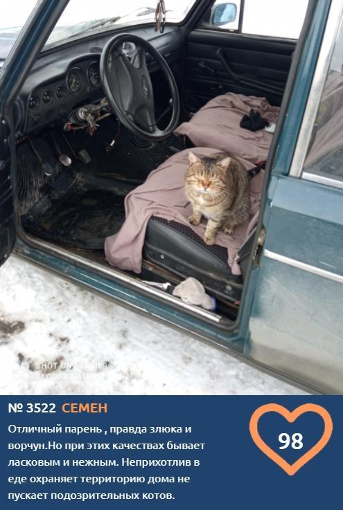 Фото Полосатый «автолюбитель» Семён стремится стать последним финалистом конкурса «Главный котик Омска-2021» 2