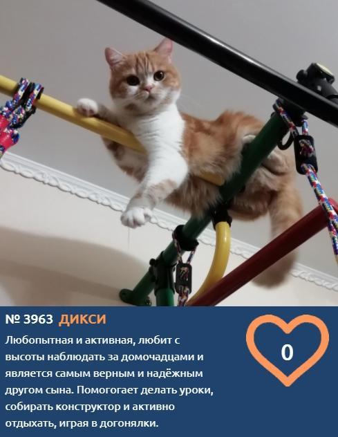 фото Паркур, школьные уроки и игры с конструктором: чем увлекается Дикси – участница конкурса «Главный котик Новосибирска-2021» 2