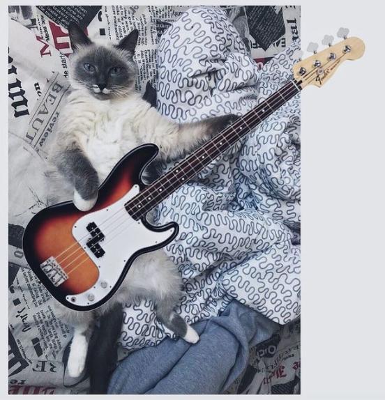 фото Блог в Instagram и татуировка с её изображением: как финалистка конкурса «Главный котик Новосибирска-2021» Шакира покоряет сердца фанатов 4