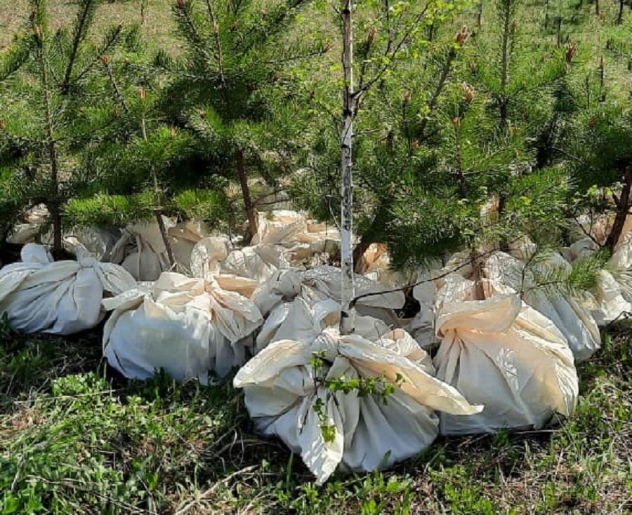 Фото Новосибирский депутат спасает деревья от вырубки 3