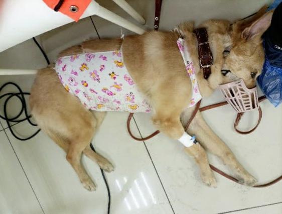 фото «33 несчастья»: невероятная история о том, как приютскую собаку с онкологией удочерили в Новосибирске 3