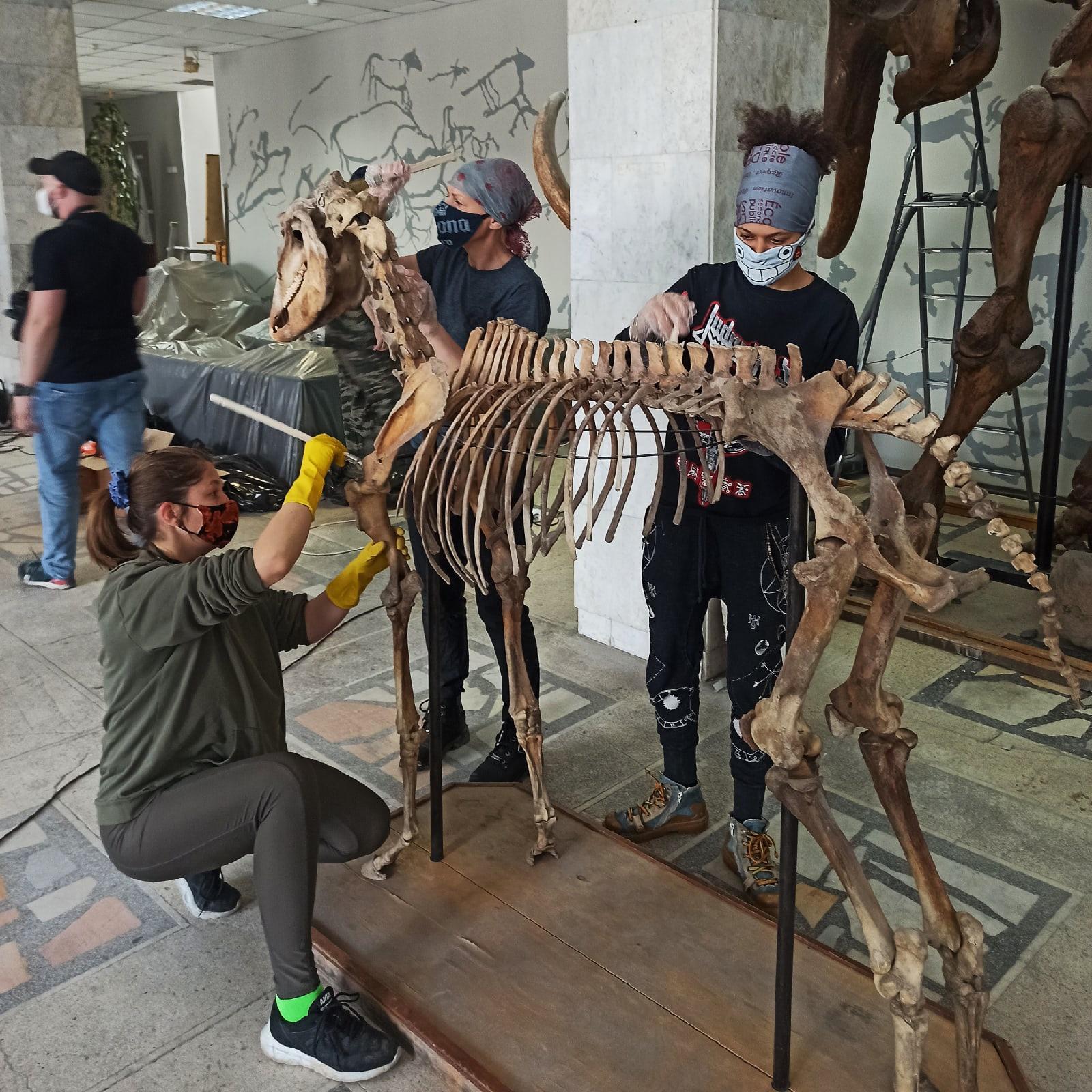 фото Жители Новосибирска пропылесосили мамонта и других древних животных 2