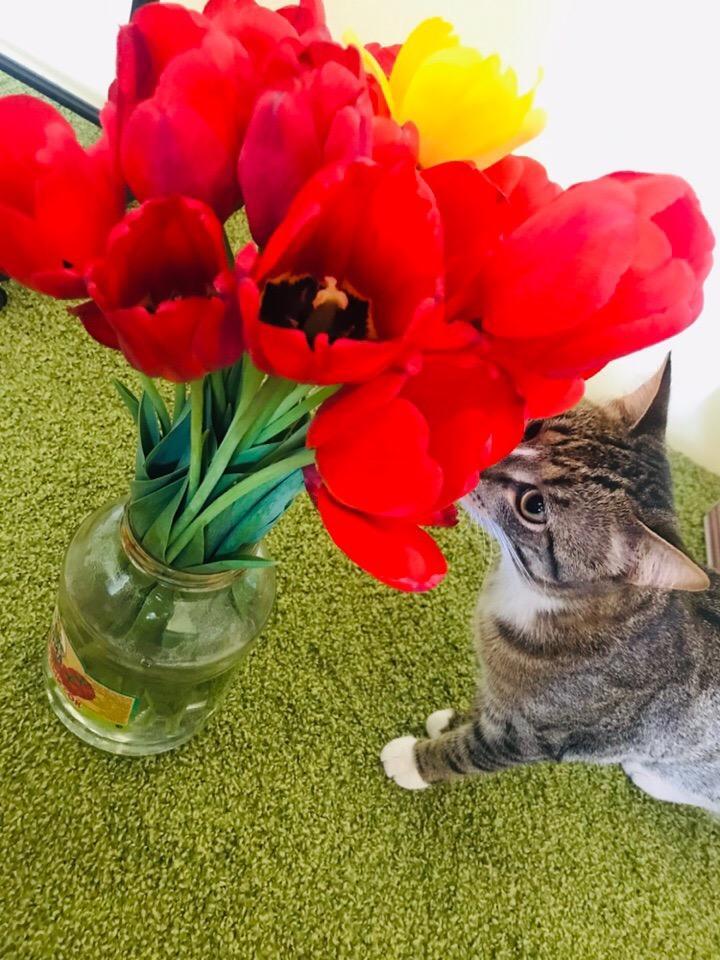 фото «Пятеро по лавкам – это счастье»: десятый «Главный котик Омска» Жорик стремится победить ради своей большой кошачьей семьи 2