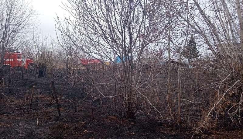 фото 149 пожаров из-за сухой травы зарегистрировали в Новосибирске 1 и 2 мая 3