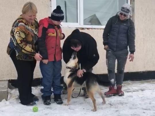 фото «Живодёры не подозревали, что подарили ему билет в новую жизнь»: история о том, как пёс из поезда обрёл свой дом и любящую семью 2