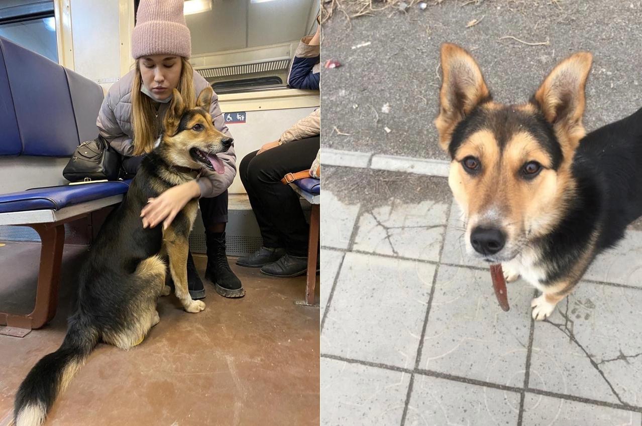 фото «Пугается резких движений»: стала известна судьба собаки из Новосибирска, которую живодёры забросили в электричку 2