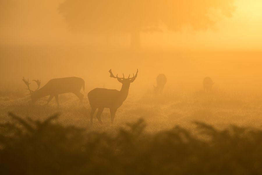 Фото Закон об охоте: божьи твари промеж де-юре и де-факто 3