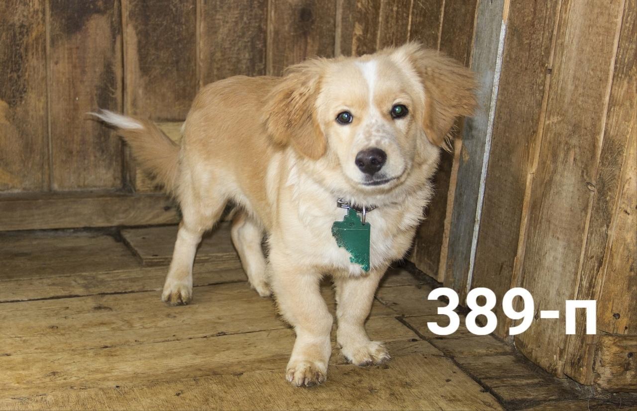 фото Домовёнок, Бэмби и  потомок борзой: собаки, которых прямо сейчас можно забрать из приюта 2
