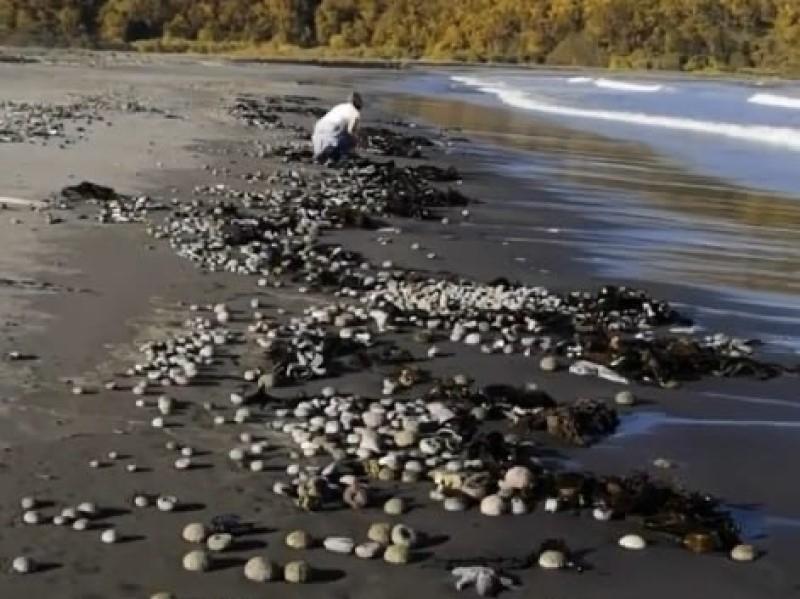 Фото Учёные заявили о странных отложениях в реке, впадающей в акваторию Камчатки 2