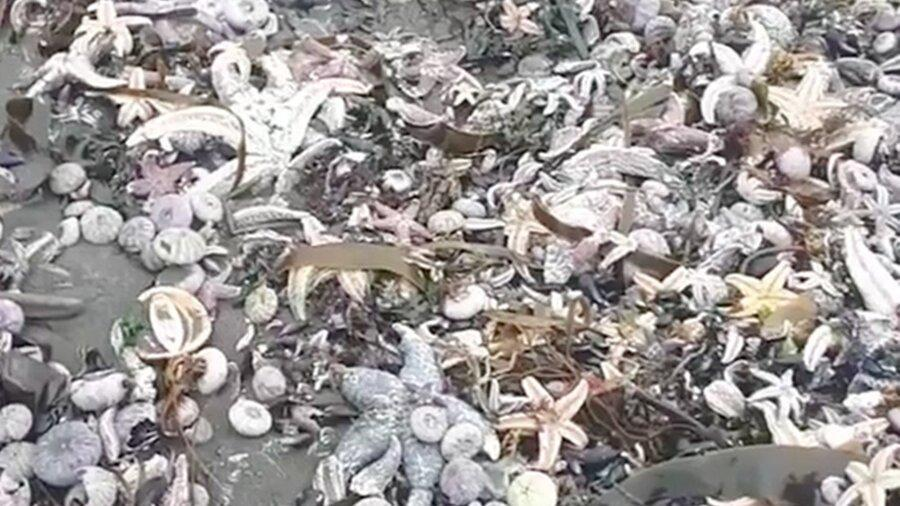 Фото Учёные РАН будут выяснять причины экологической катастрофы на Камчатке 2