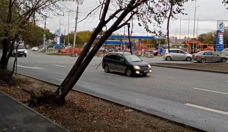 фото Новосибирцы пожаловались на угрожающие машинам аварийные деревья 2
