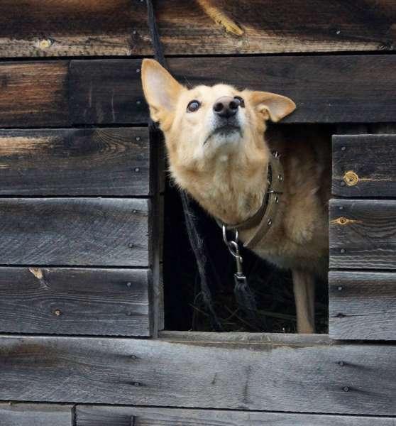 фото Домовёнок, Бэмби и  потомок борзой: собаки, которых прямо сейчас можно забрать из приюта 3