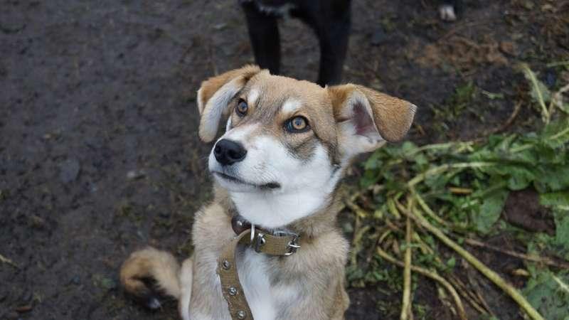 фото Домовёнок, Бэмби и  потомок борзой: собаки, которых прямо сейчас можно забрать из приюта 6