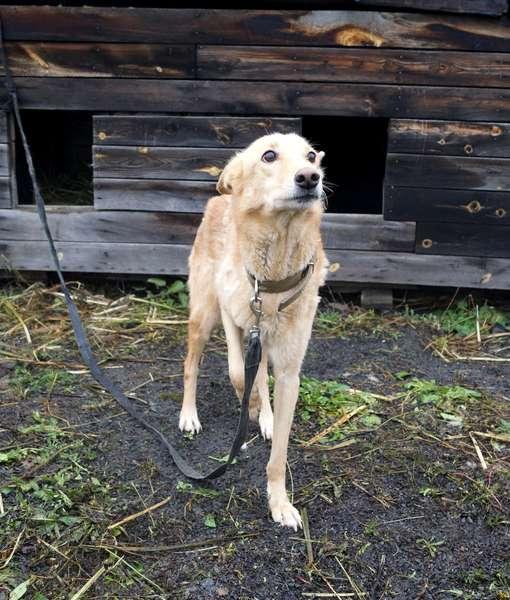 фото Домовёнок, Бэмби и  потомок борзой: собаки, которых прямо сейчас можно забрать из приюта 4