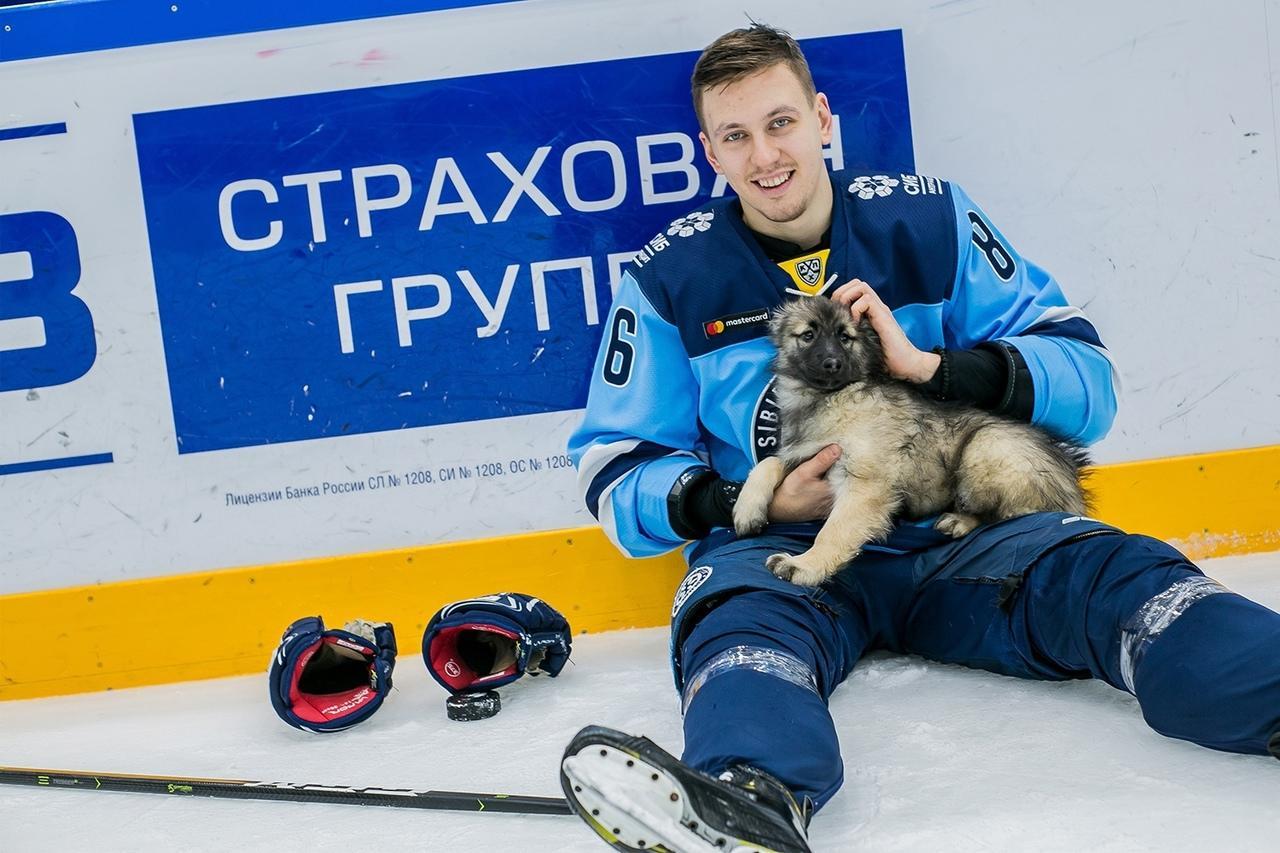 Фото Лапки и благотворительность: «Сибирь» посвятит новый домашний матч защите животных 2