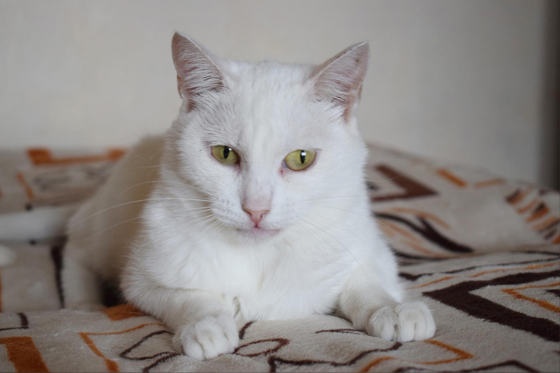 Фото Друзья непростой судьбы: новосибирцев просят пристроить грустных котиков и собачек 4