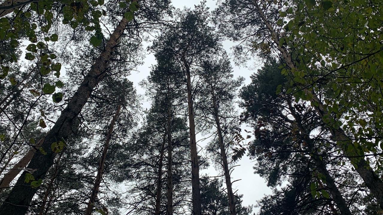Фото «Дождик бесил, но я не сдалась»: новосибирцы закрыли грибной сезон – 2021 7