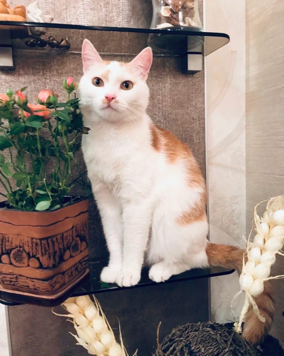 Фото Друзья непростой судьбы: новосибирцев просят пристроить грустных котиков и собачек 5