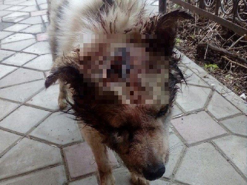 Фото Строгий режим за искалеченную собаку дали в России 2