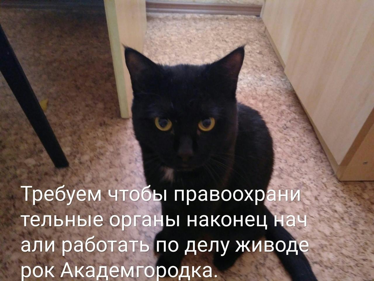 Фото Зоозащитники запустили флешмоб с целью наказать живодёрок из Новосибирска 2