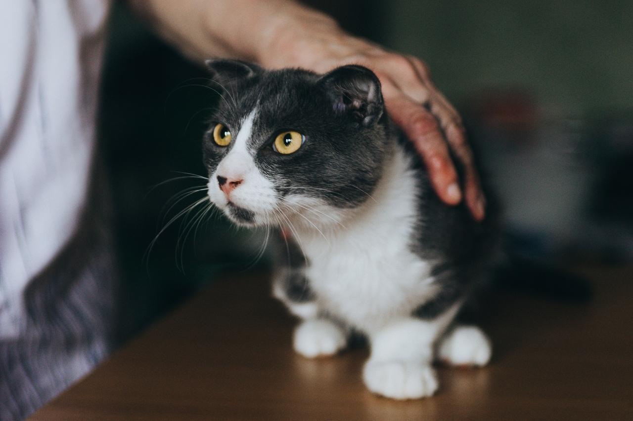 фото Котёнка с тремя лапами нашли в Новосибирске 2