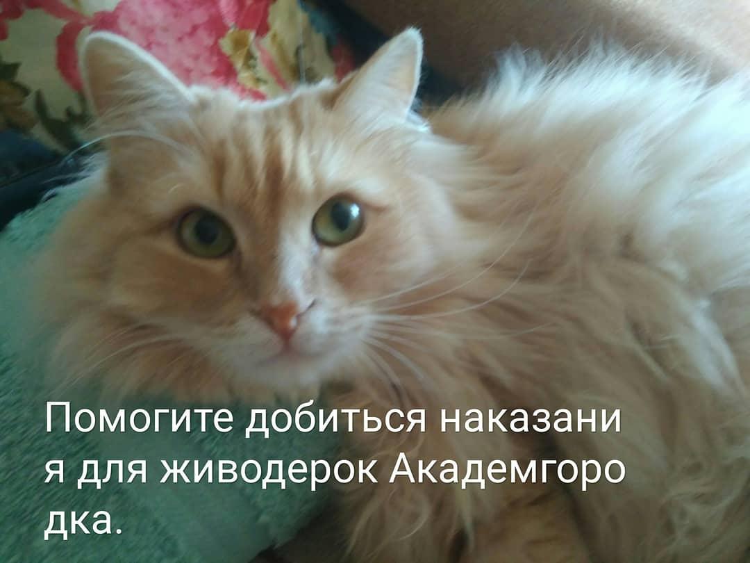 Фото Зоозащитники запустили флешмоб с целью наказать живодёрок из Новосибирска 3