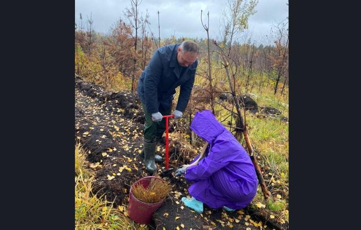 Фото Более 150 тысяч молодых деревьев высадят в Новосибирской области по нацпроекту 2