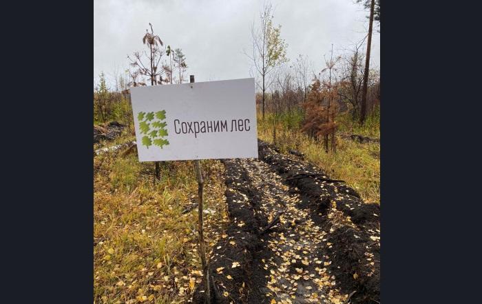 Фото Более 150 тысяч молодых деревьев высадят в Новосибирской области по нацпроекту 3