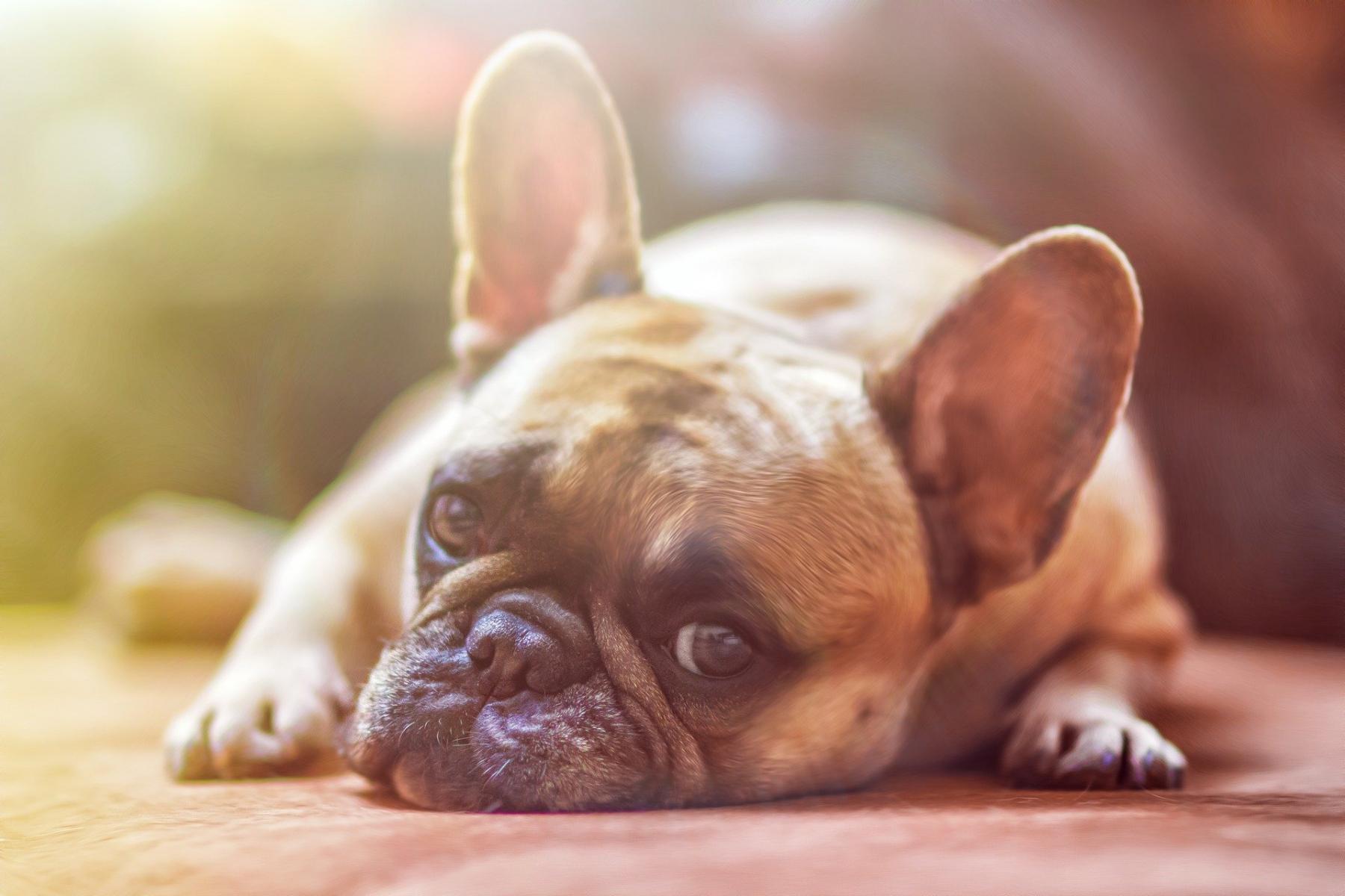 Фото «Ела собак, чтобы выжить»: на алтайскую живодёрку завели уголовное дело 2