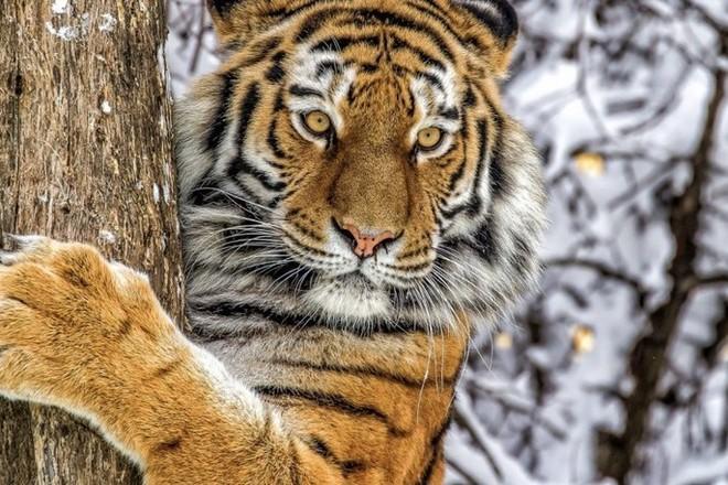 Фото Новые спикеры заксобрания и горсовета, Карелин – сенатор и убийство краснокнижного тигра: главные новости 25 сентября – в одном материале 9