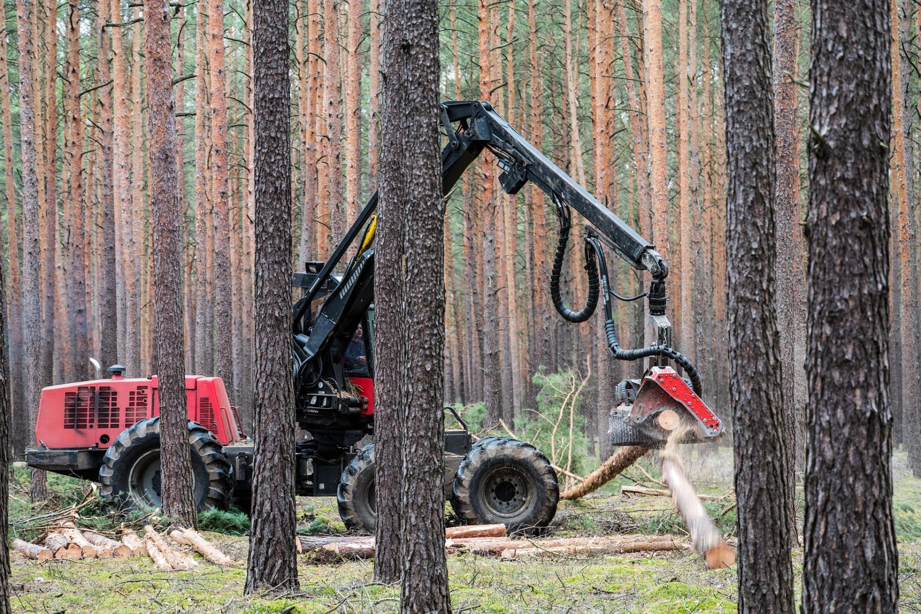 Фото Путин: в России будет запрещён экспорт необработанной древесины 2