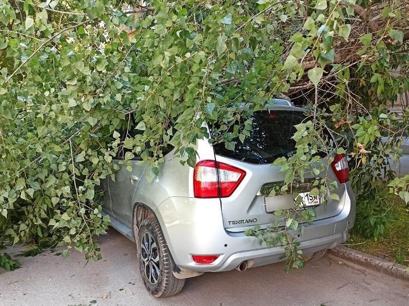 фото Юрист рассказал, как можно получить компенсацию за упавшее на машину дерево 2