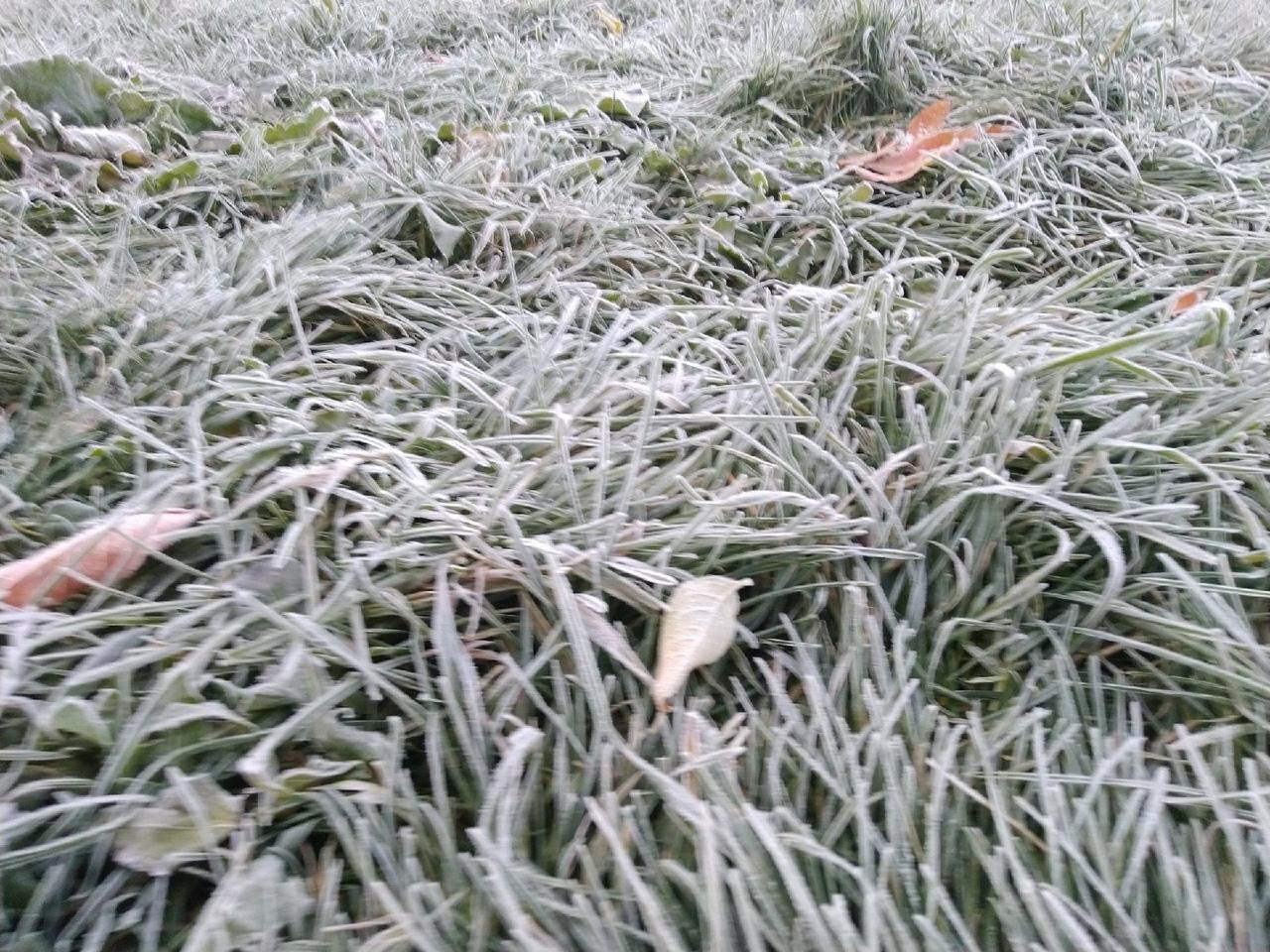 Фото Морозы до -9 градусов пришли в Новосибирскую область 2