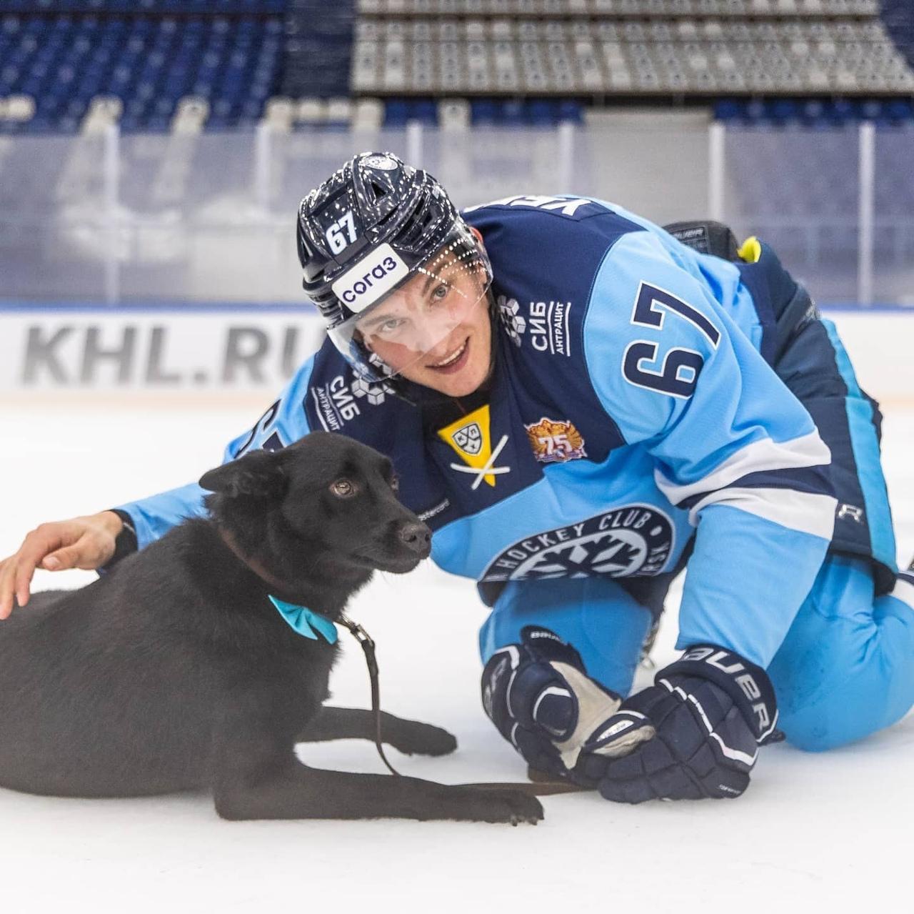 Фото Хоккеисты «Сибири» устроили фотосессию с бездомными животными в Новосибирске 3