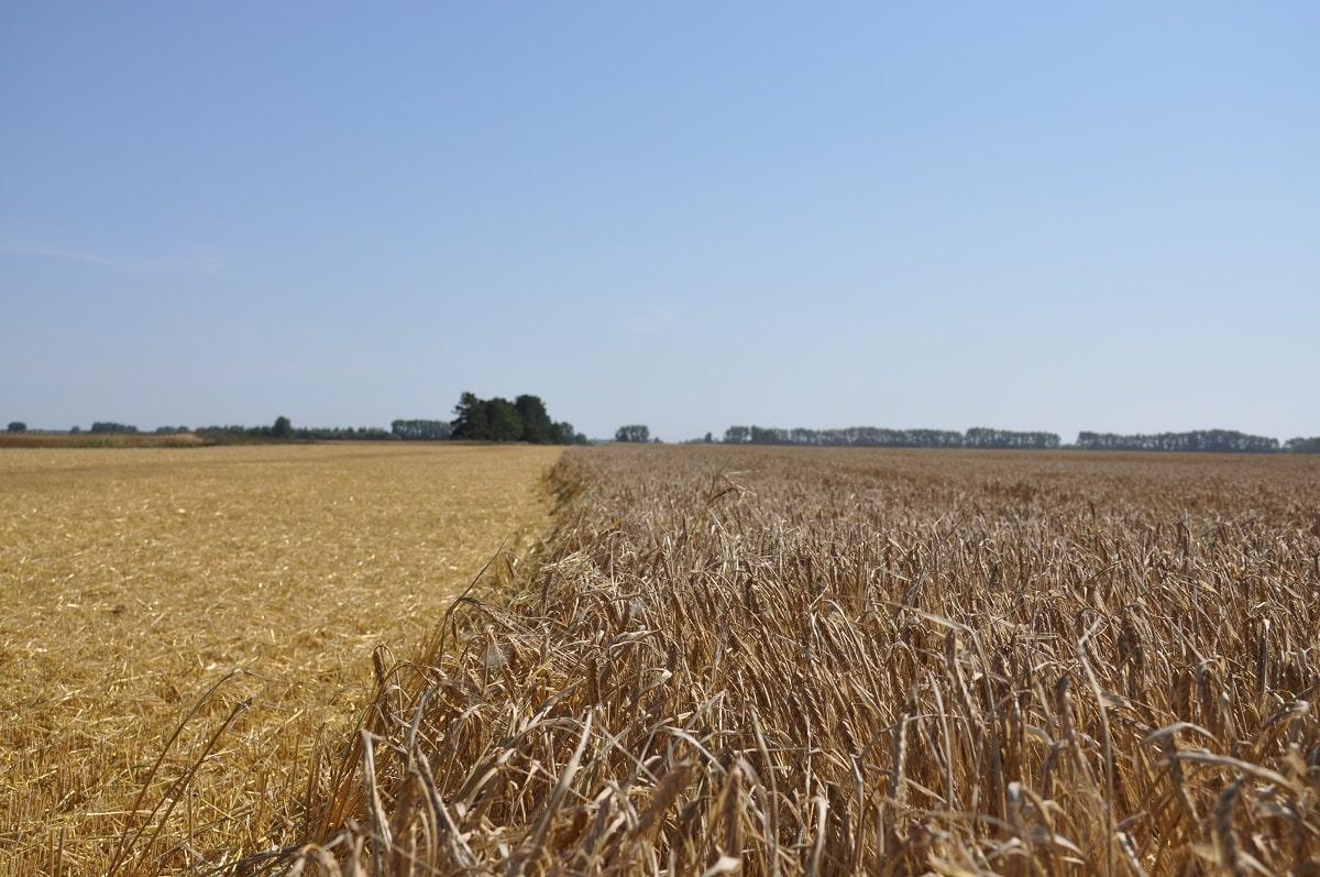 Фото Рекордный урожай зерновых планируют собрать в Новосибирске 4